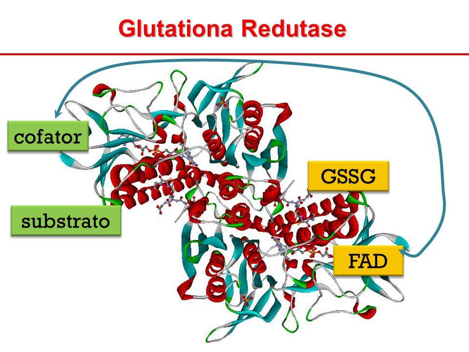 Glutationa Redutase cofator GSSG substrato FAD