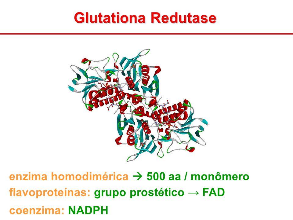 Glutationa Redutase enzima homodimérica  500 aa / monômero