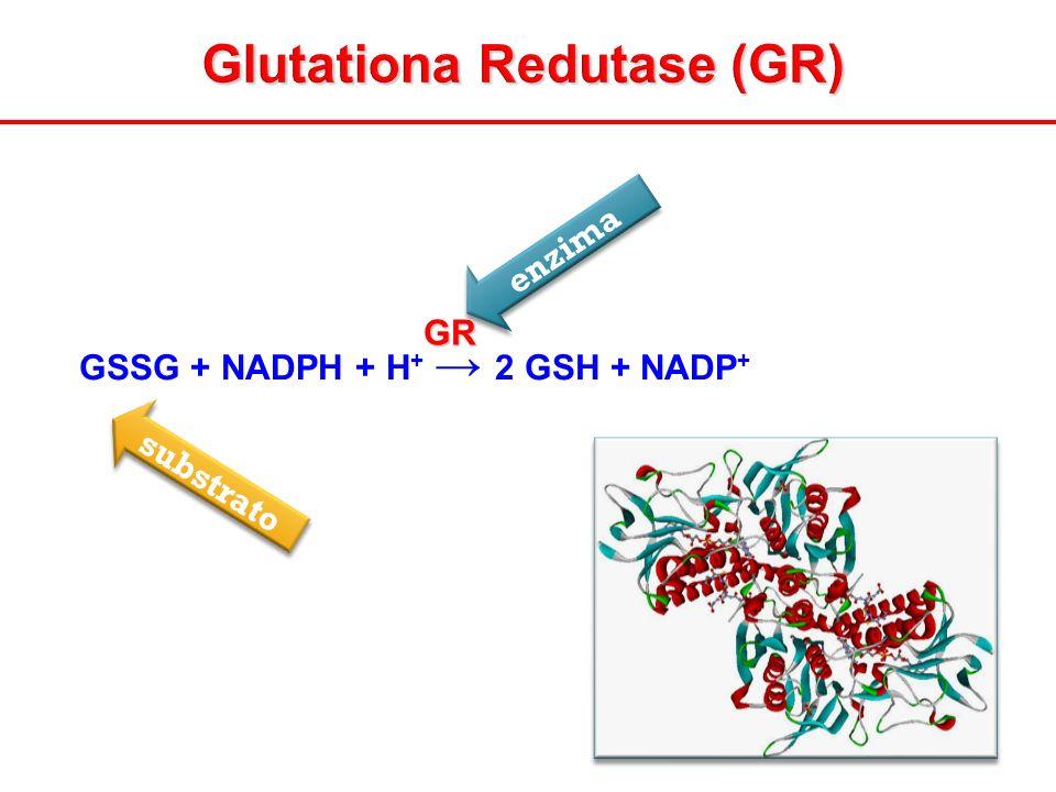 Glutationa Redutase (GR)