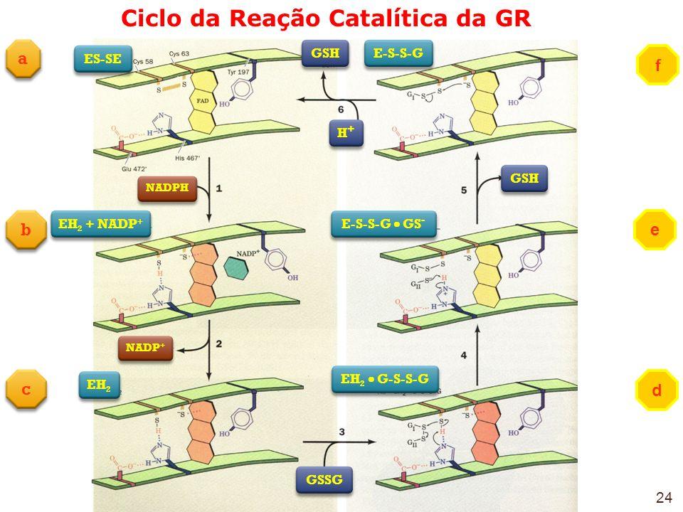 Ciclo da Reação Catalítica da GR