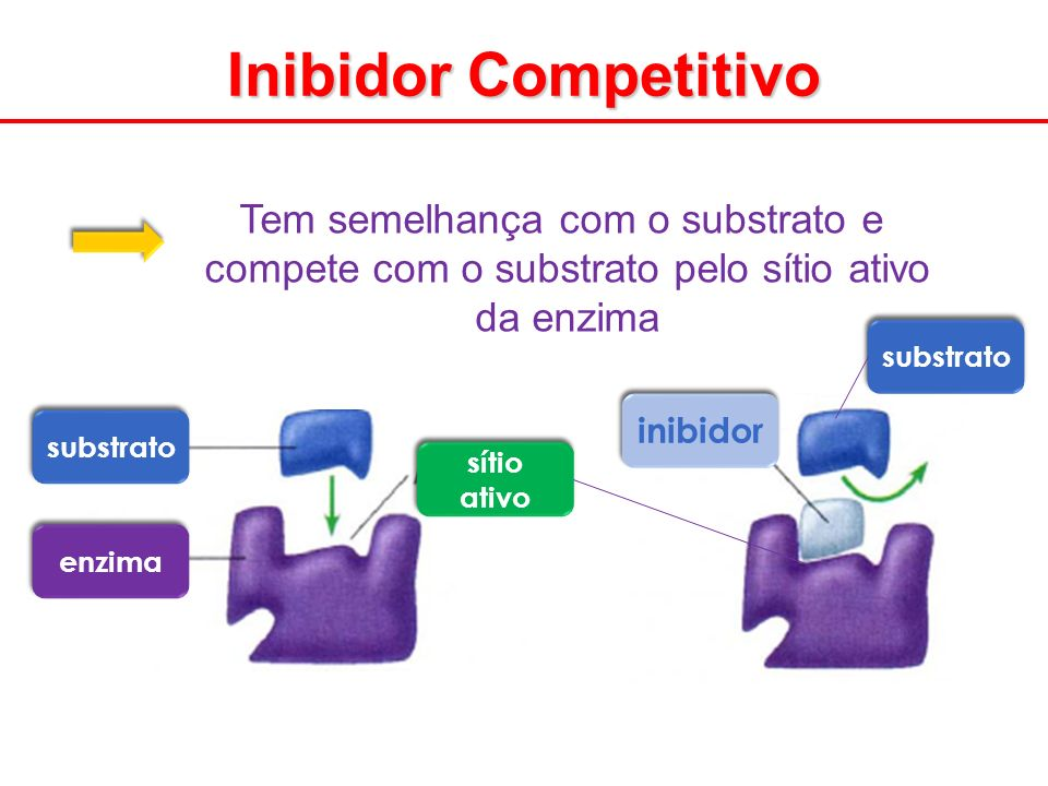 Inibidor Competitivo Tem semelhança com o substrato e
