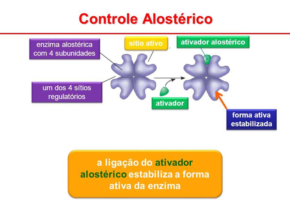 Controle Alostérico sitio ativo. ativador alostérico. enzima alostérica com 4 subunidades. um dos 4 sítios regulatórios.