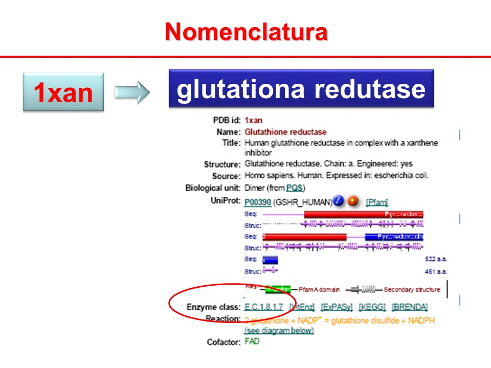 glutationa redutase 1xan