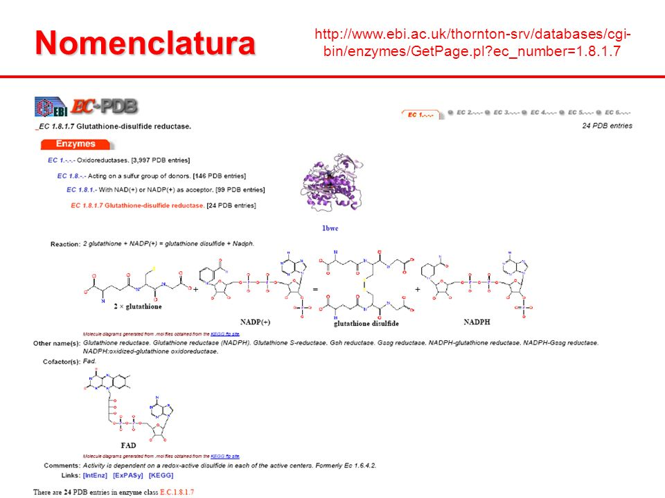 Nomenclatura http://www.ebi.ac.uk/thornton-srv/databases/cgi-bin/enzymes/GetPage.pl ec_number=1.8.1.7.