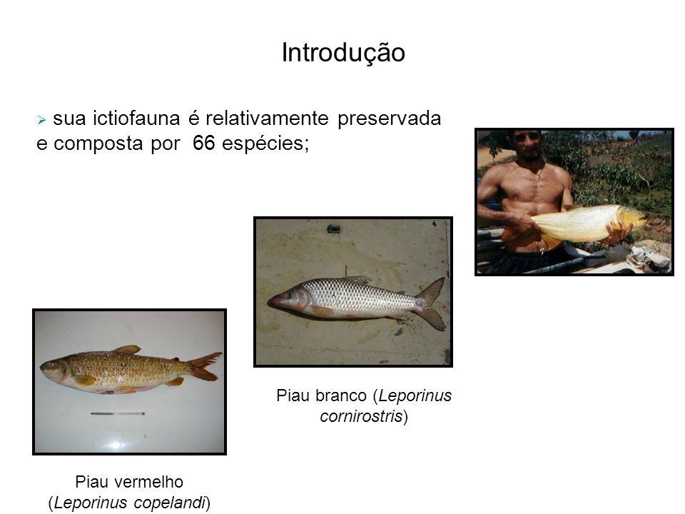 Introdução sua ictiofauna é relativamente preservada e composta por 66 espécies; Piau branco (Leporinus cornirostris)