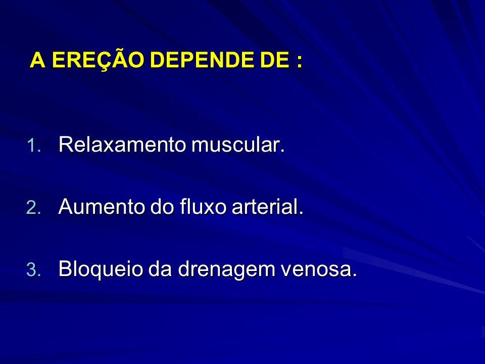 A EREÇÃO DEPENDE DE : Relaxamento muscular. Aumento do fluxo arterial. Bloqueio da drenagem venosa.