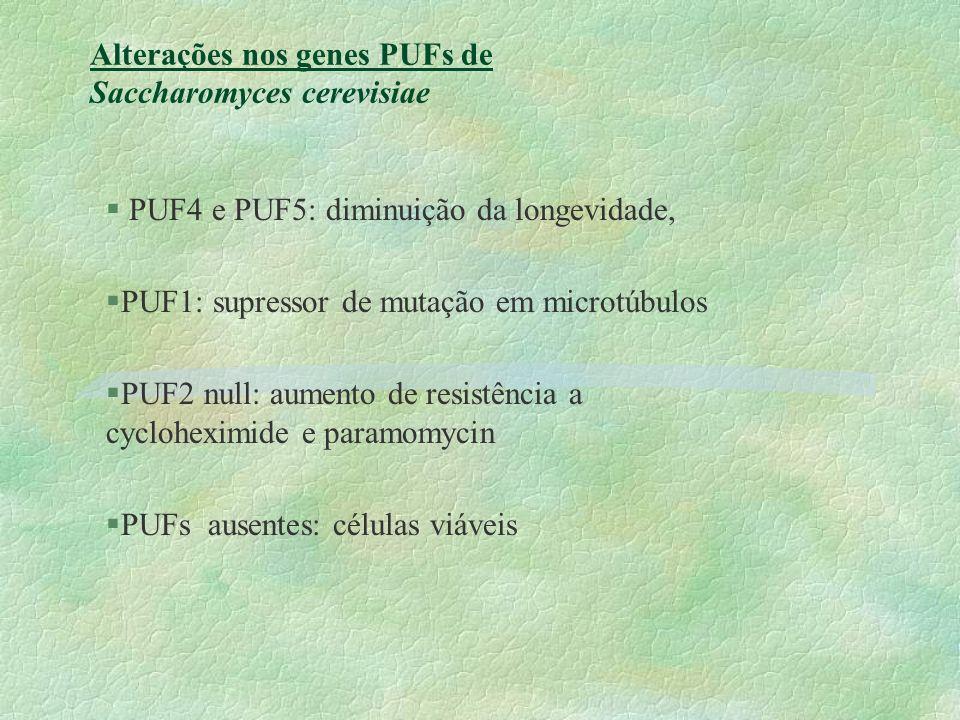 Alterações nos genes PUFs de Saccharomyces cerevisiae
