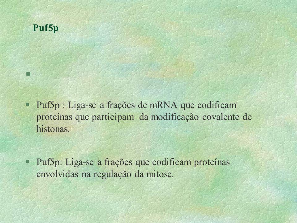 Puf5pPuf5p : Liga-se a frações de mRNA que codificam proteínas que participam da modificação covalente de histonas.