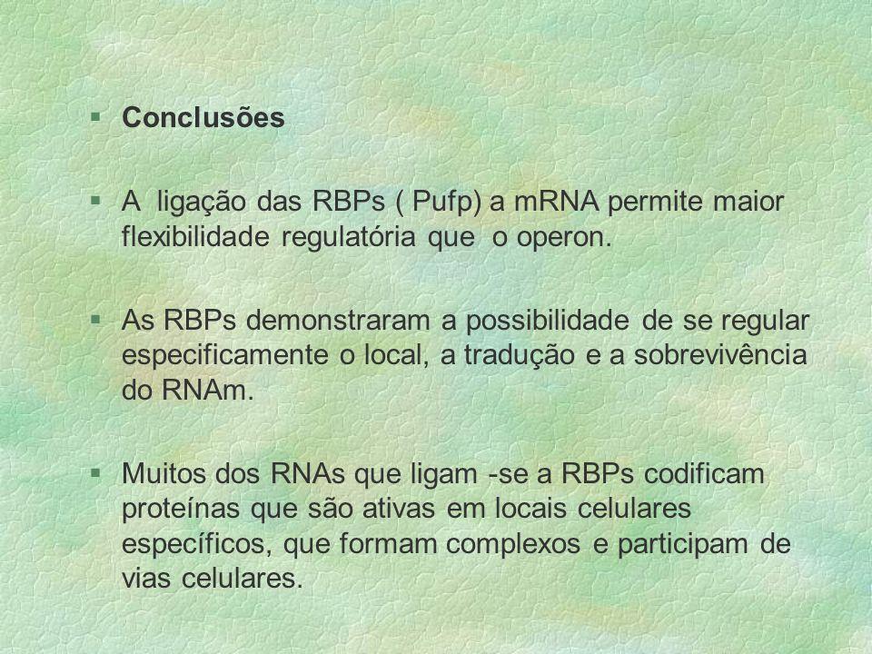 Conclusões A ligação das RBPs ( Pufp) a mRNA permite maior flexibilidade regulatória que o operon.