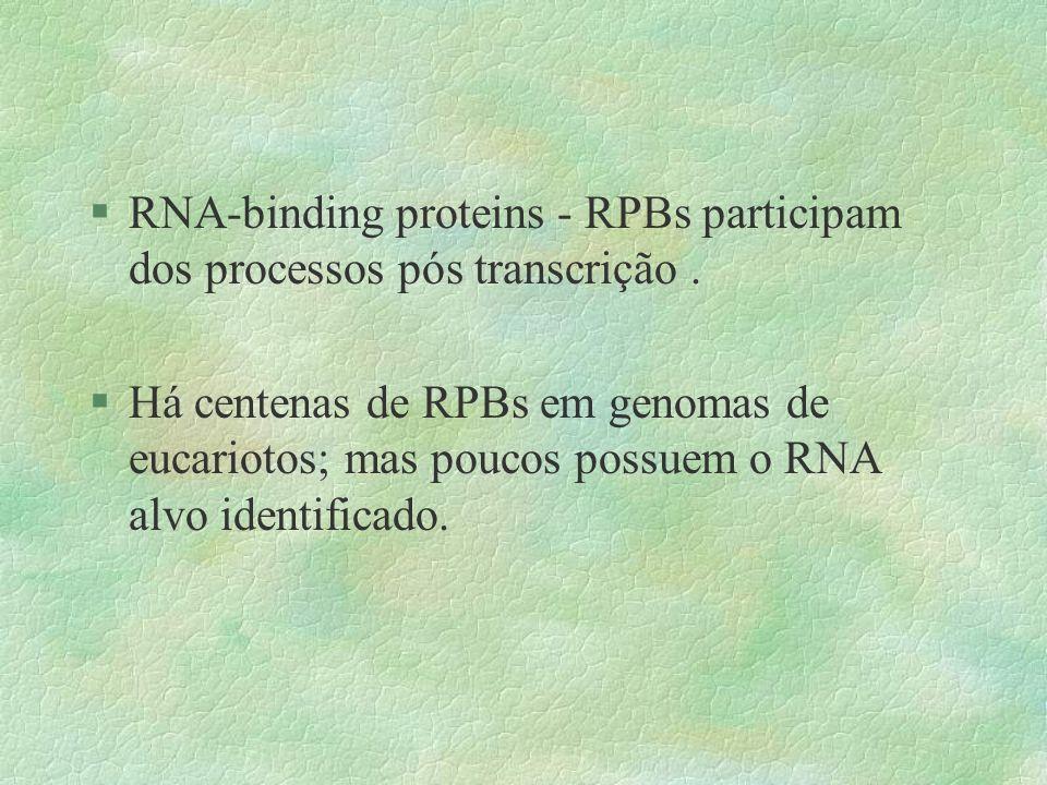 RNA-binding proteins - RPBs participam dos processos pós transcrição .