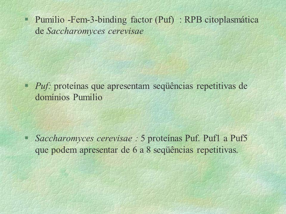 Pumilio -Fem-3-binding factor (Puf) : RPB citoplasmática de Saccharomyces cerevisae