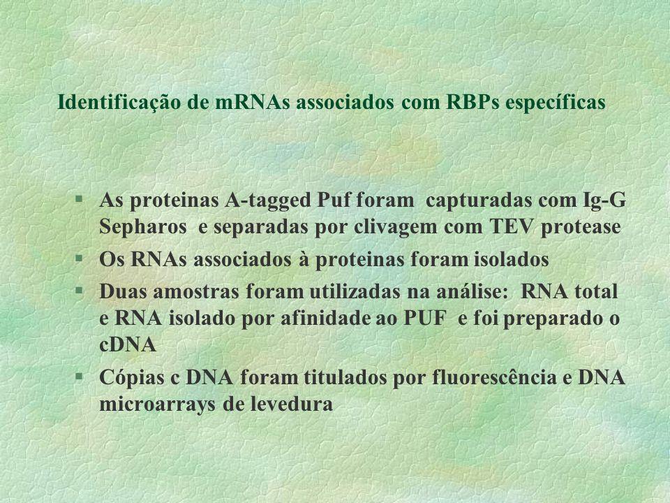 Identificação de mRNAs associados com RBPs específicas
