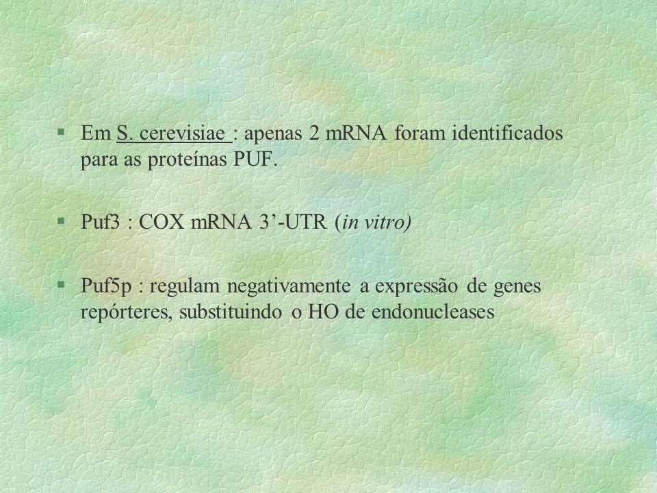 Em S. cerevisiae : apenas 2 mRNA foram identificados para as proteínas PUF.