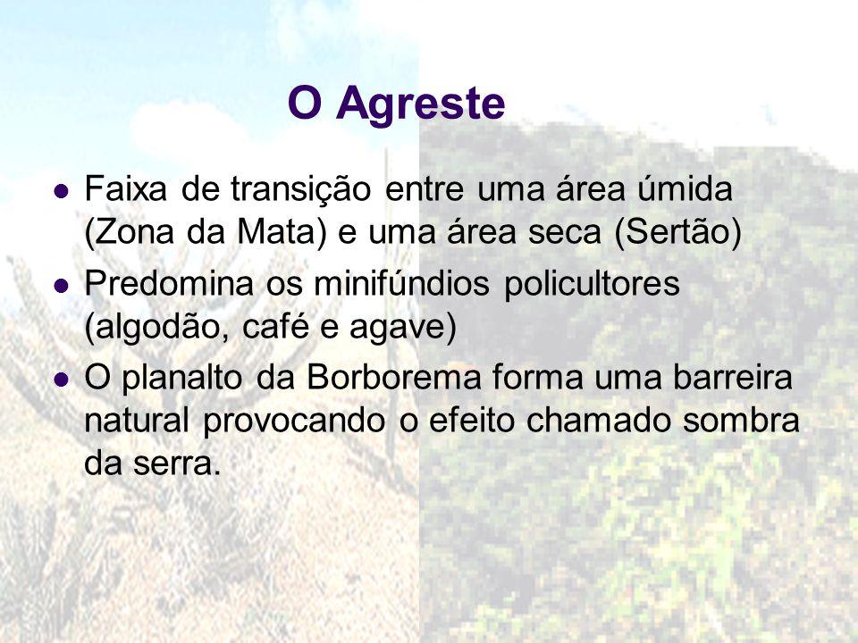 O Agreste Faixa de transição entre uma área úmida (Zona da Mata) e uma área seca (Sertão)