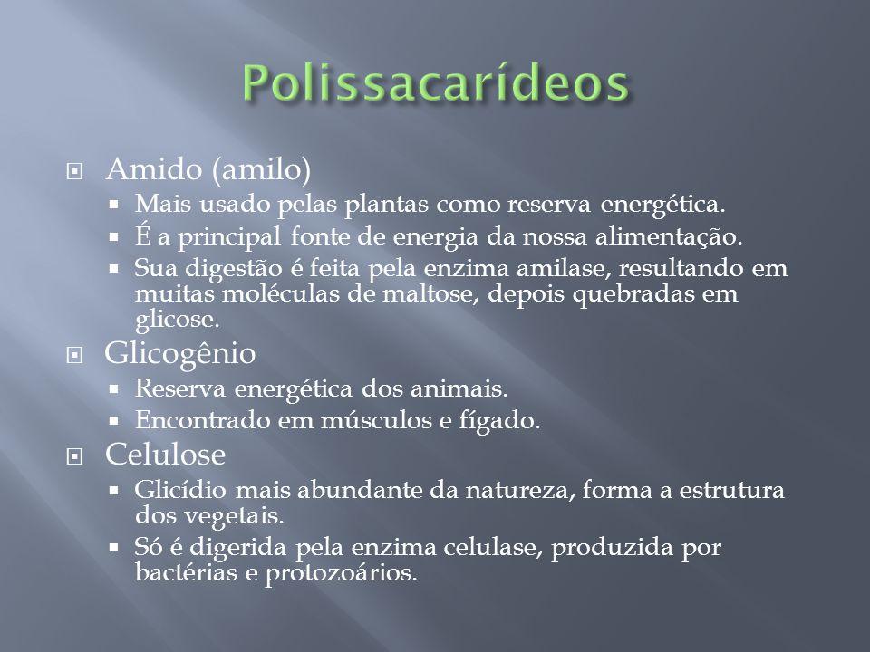 Polissacarídeos Amido (amilo) Glicogênio Celulose