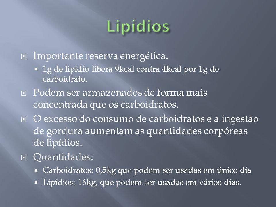 Lipídios Importante reserva energética.