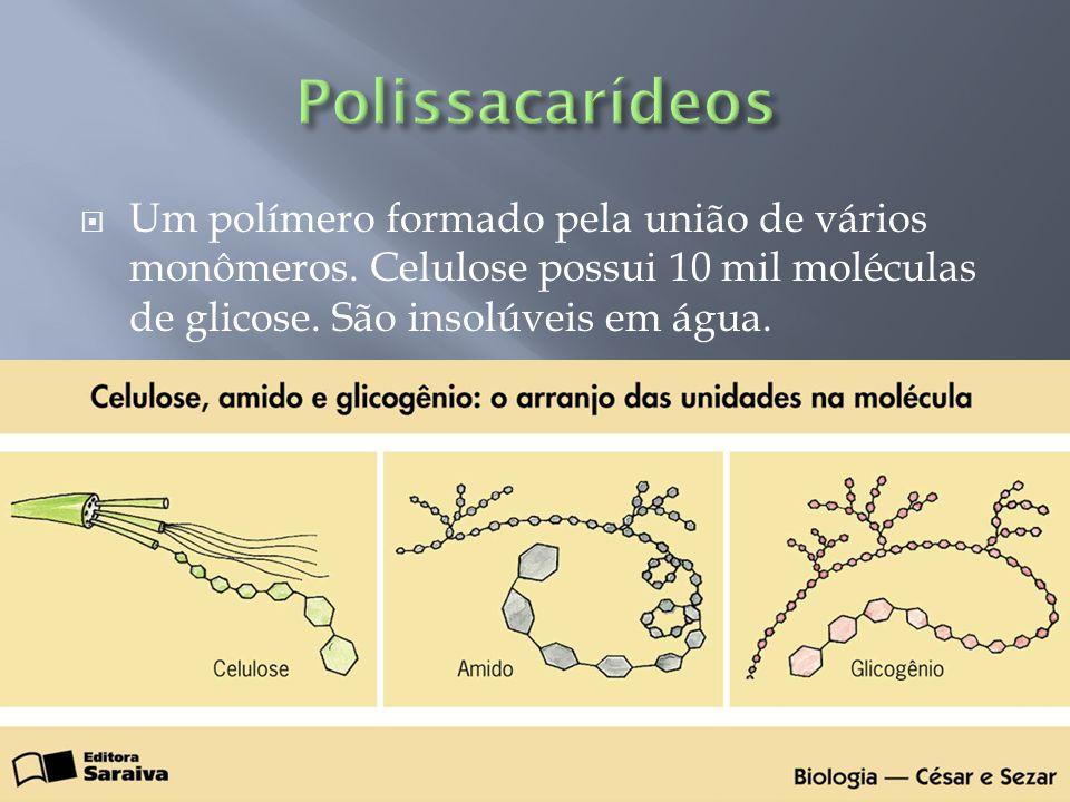 Polissacarídeos Um polímero formado pela união de vários monômeros.