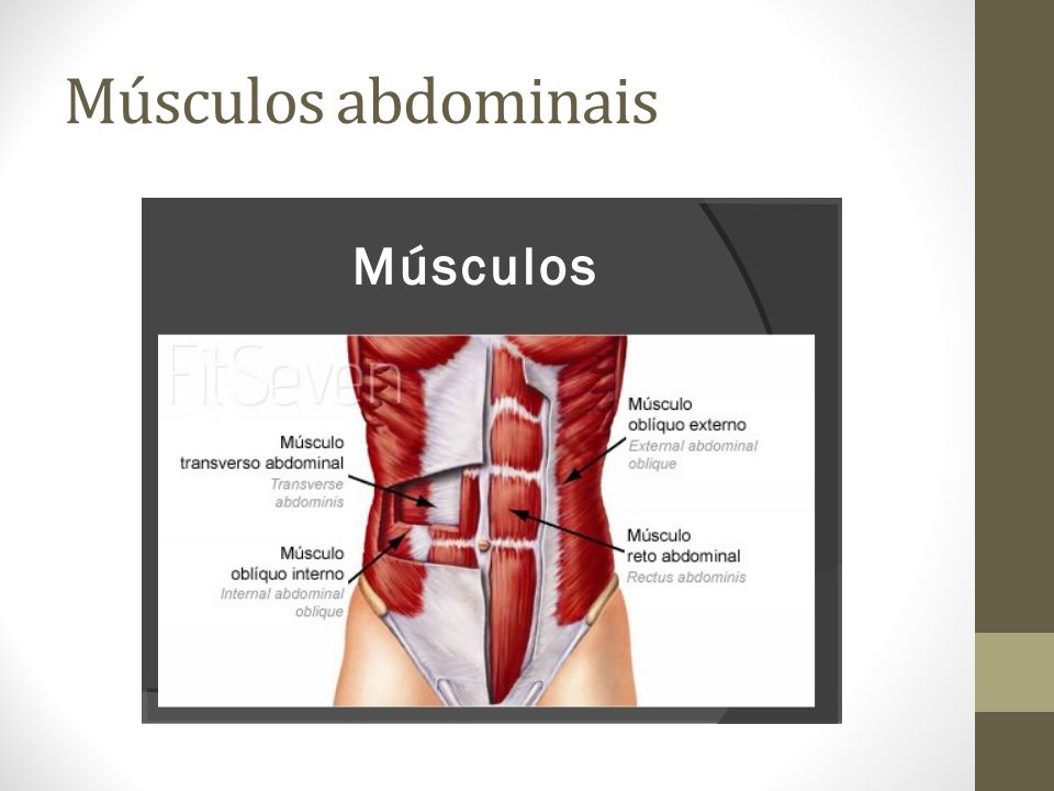 Músculos abdominais Prof: Erika Clemente. - ppt video