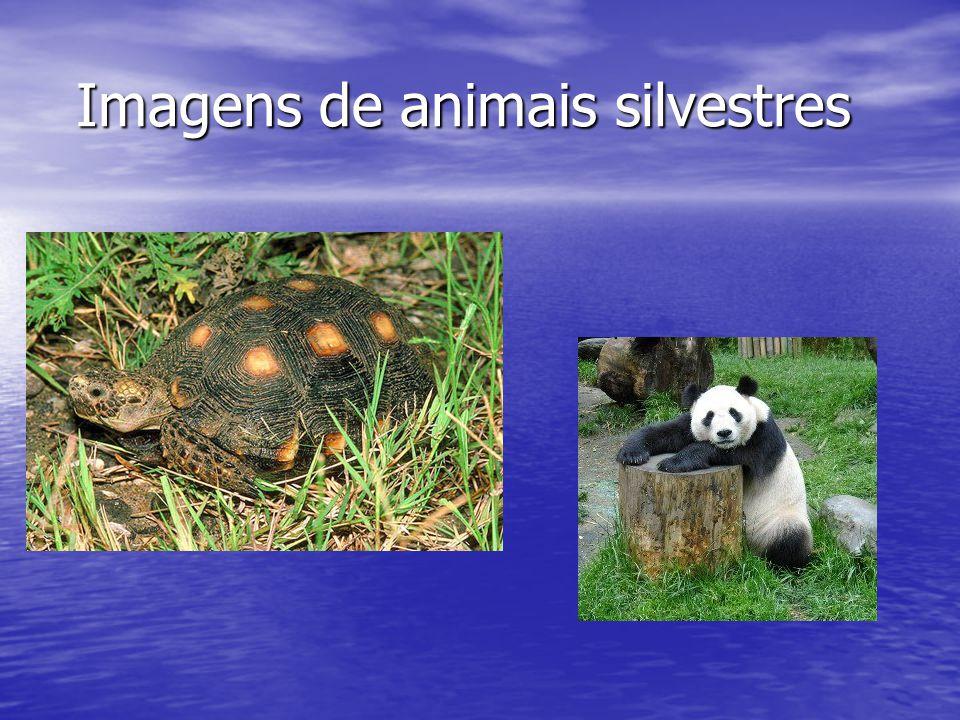 Imagens de animais silvestres