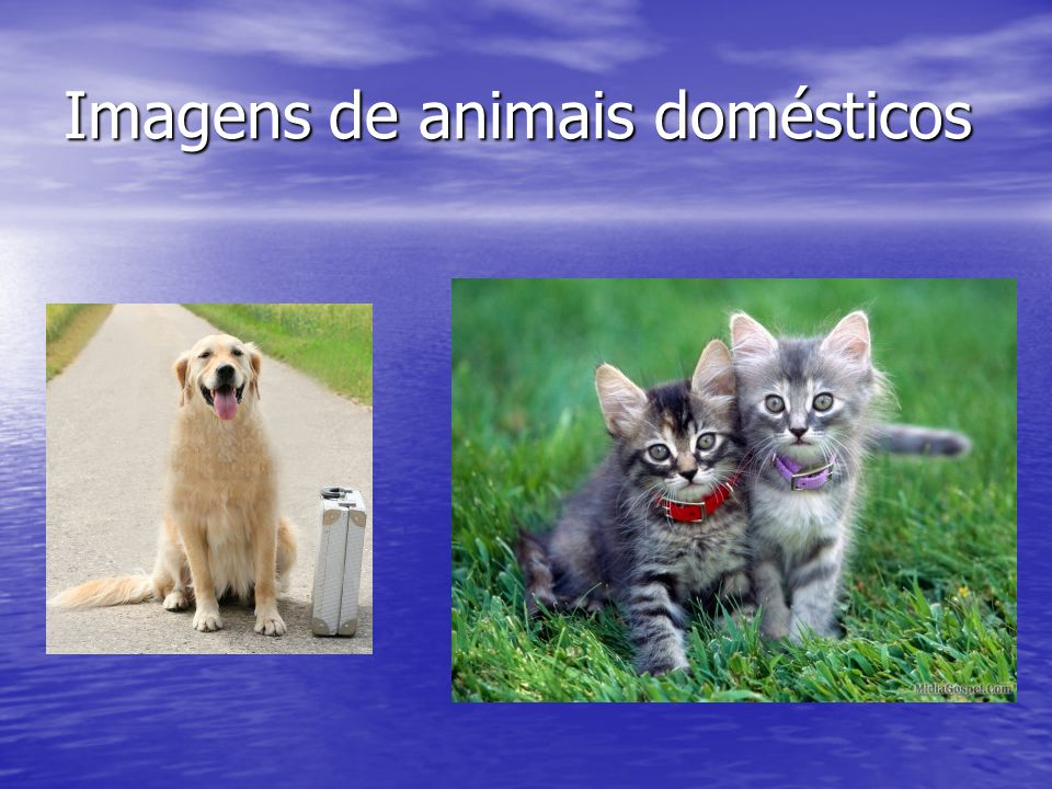 Imagens de animais domésticos