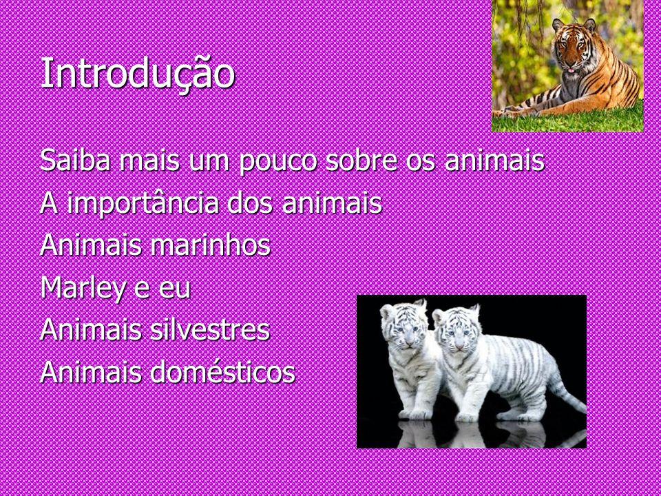 Introdução Saiba mais um pouco sobre os animais