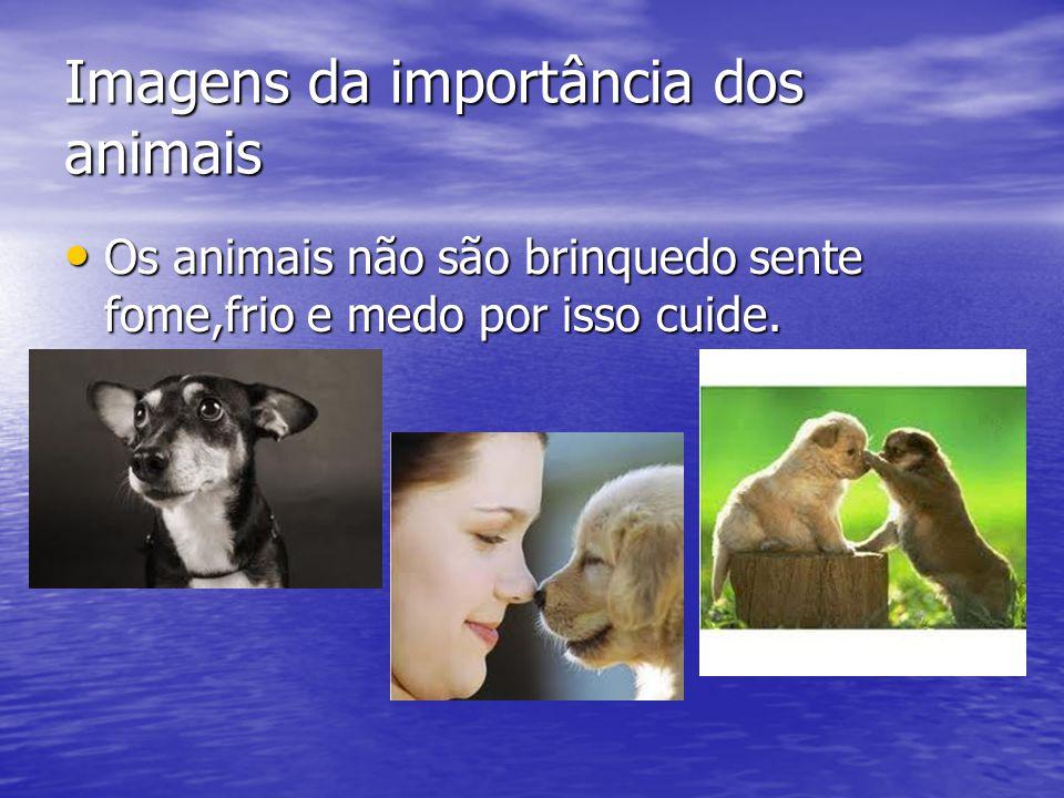 Imagens da importância dos animais