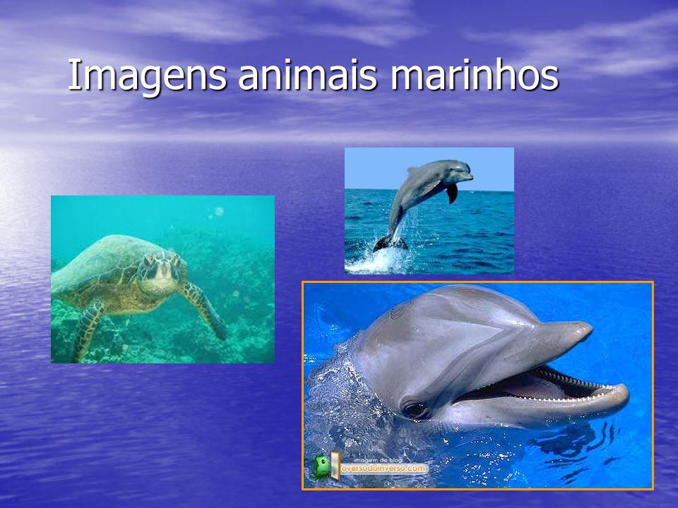 Imagens animais marinhos