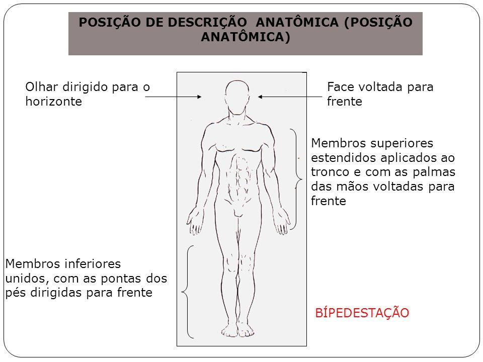 POSIÇÃO DE DESCRIÇÃO ANATÔMICA (POSIÇÃO ANATÔMICA)