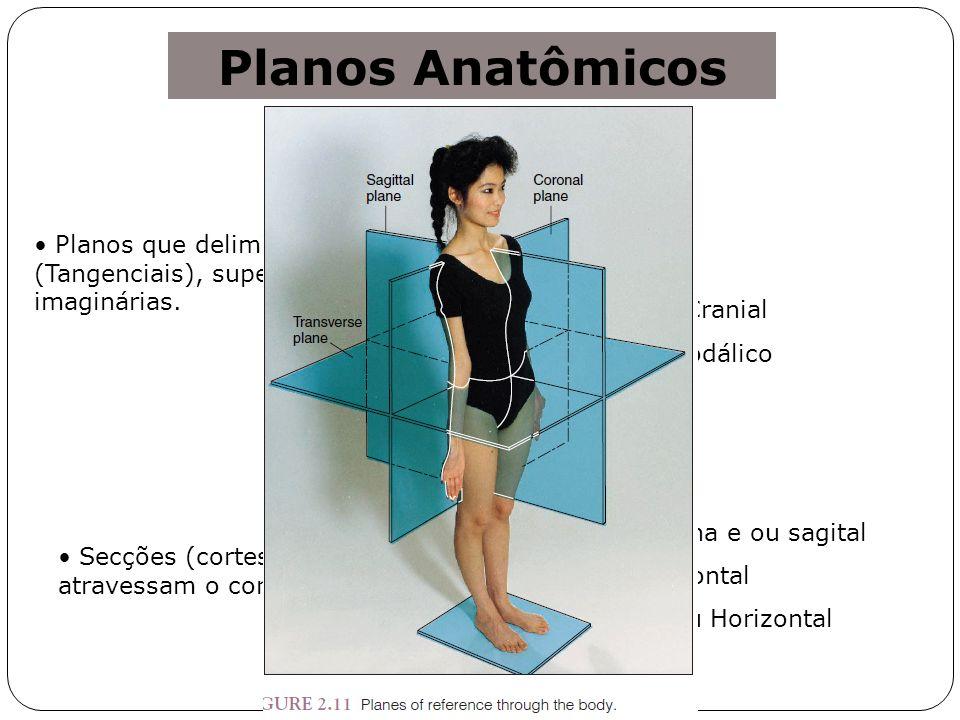 Planos Anatômicos Ventral Dorsal Laterais Superior ou Cranial