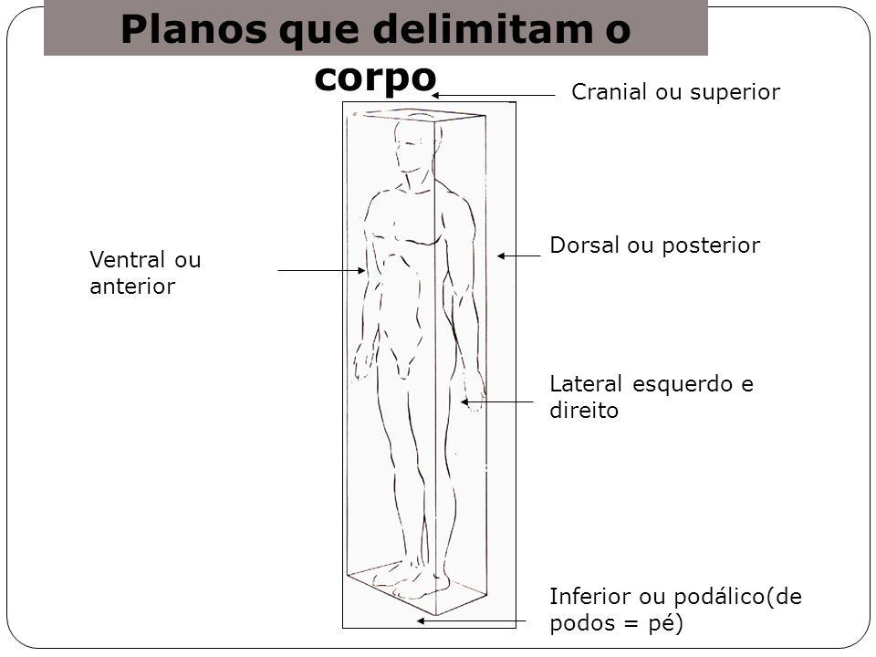 Planos que delimitam o corpo