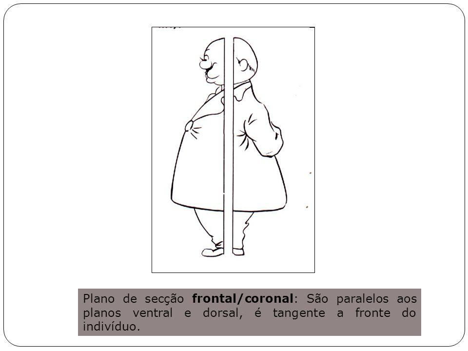 Plano de secção frontal/coronal: São paralelos aos planos ventral e dorsal, é tangente a fronte do indivíduo.