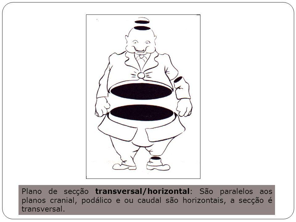 Plano de secção transversal/horizontal: São paralelos aos planos cranial, podálico e ou caudal são horizontais, a secção é transversal.