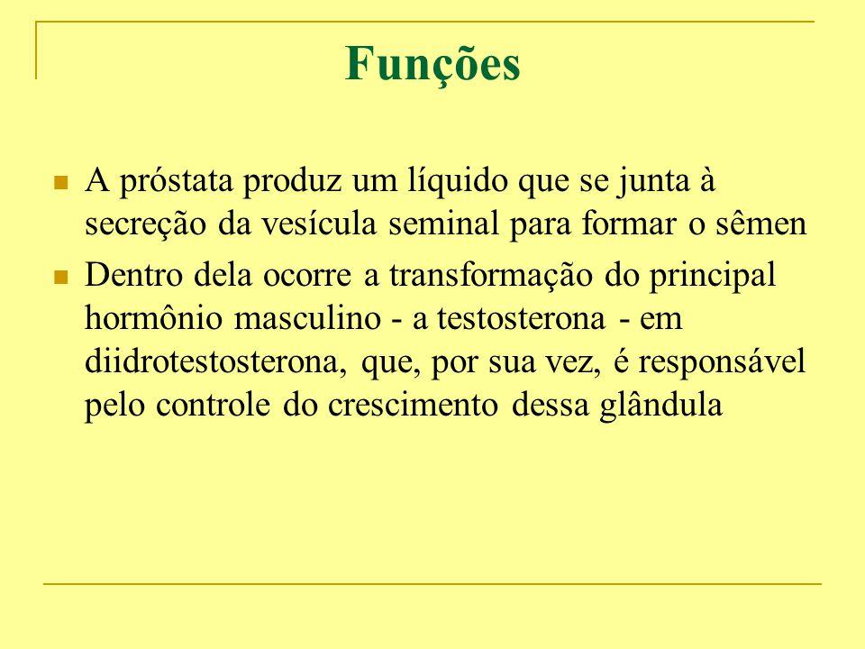 Funções A próstata produz um líquido que se junta à secreção da vesícula seminal para formar o sêmen.