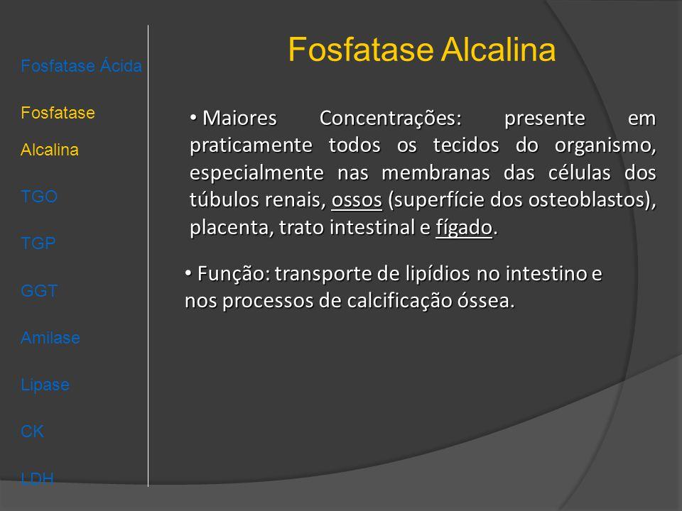 Fosfatase Alcalina Fosfatase Ácida Fosfatase Alcalina TGO