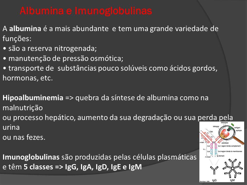 Albumina e Imunoglobulinas