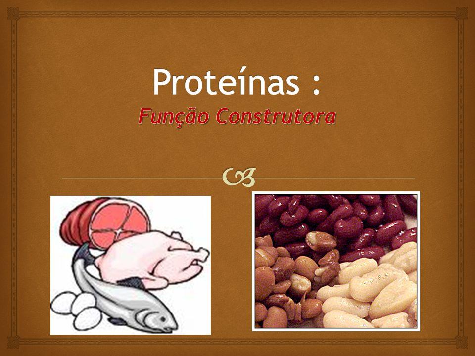 Proteínas : Função Construtora