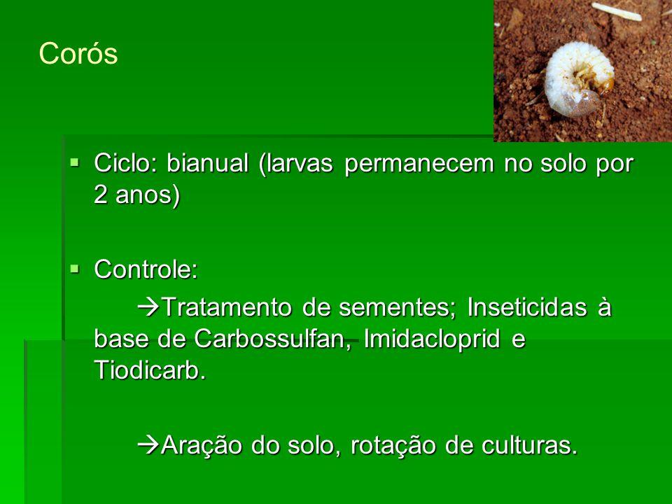 Corós Ciclo: bianual (larvas permanecem no solo por 2 anos) Controle: