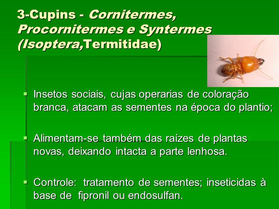 3-Cupins - Cornitermes, Procornitermes e Syntermes (Isoptera,Termitidae)