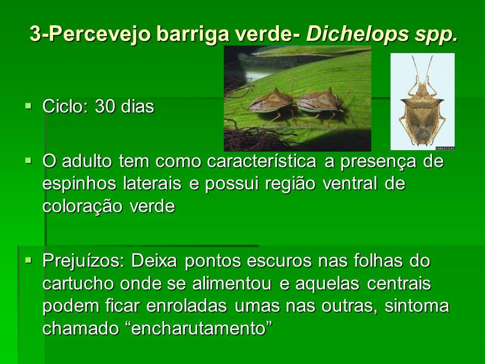 3-Percevejo barriga verde- Dichelops spp.