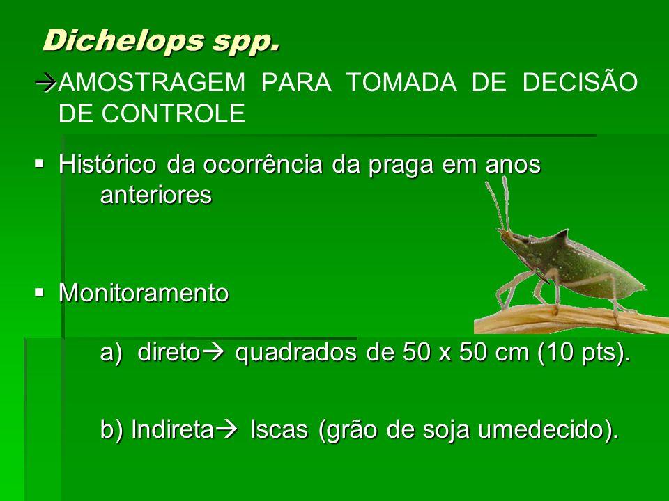 Dichelops spp. AMOSTRAGEM PARA TOMADA DE DECISÃO DE CONTROLE