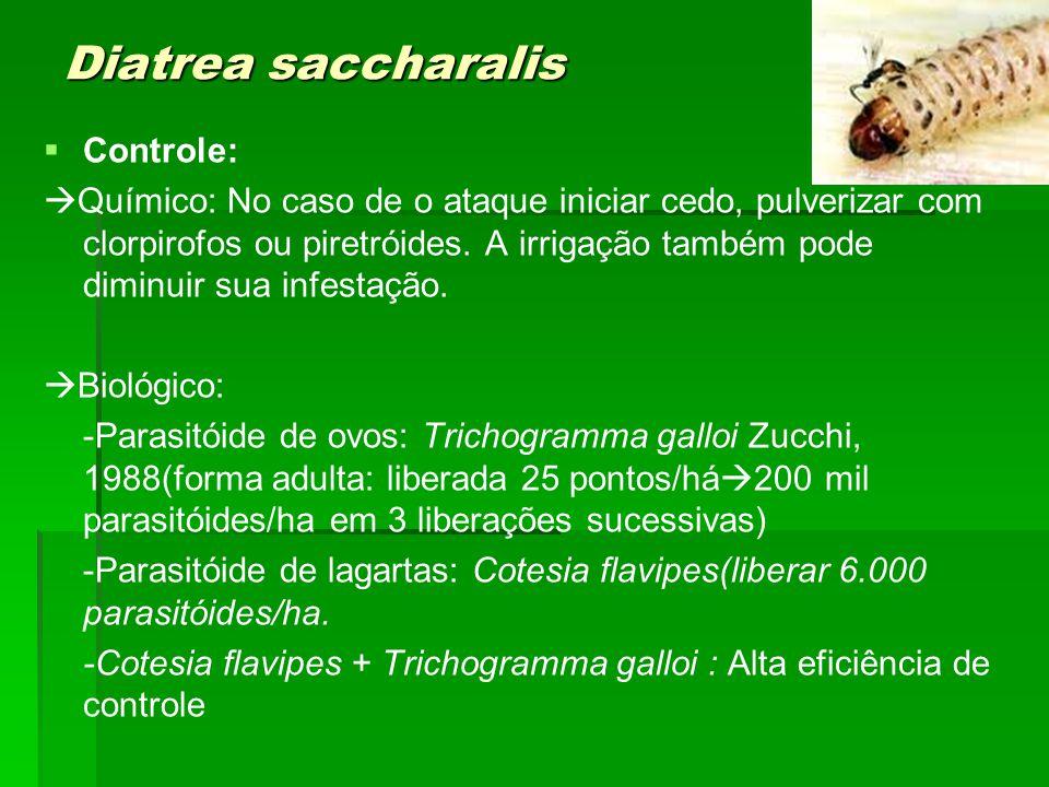Diatrea saccharalis Controle: