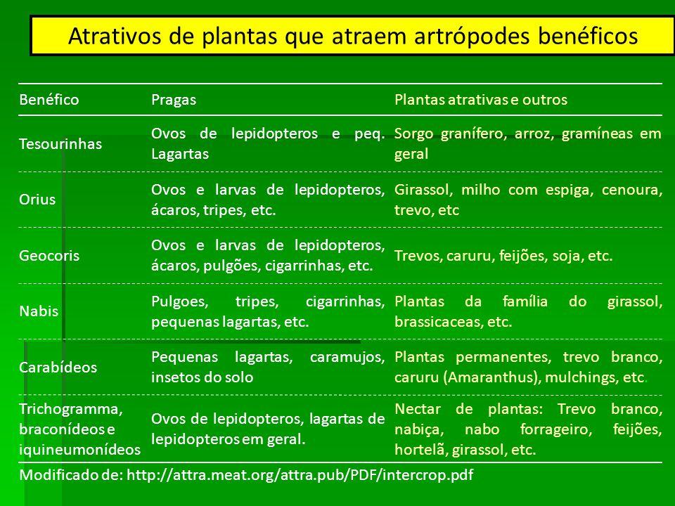 Atrativos de plantas que atraem artrópodes benéficos