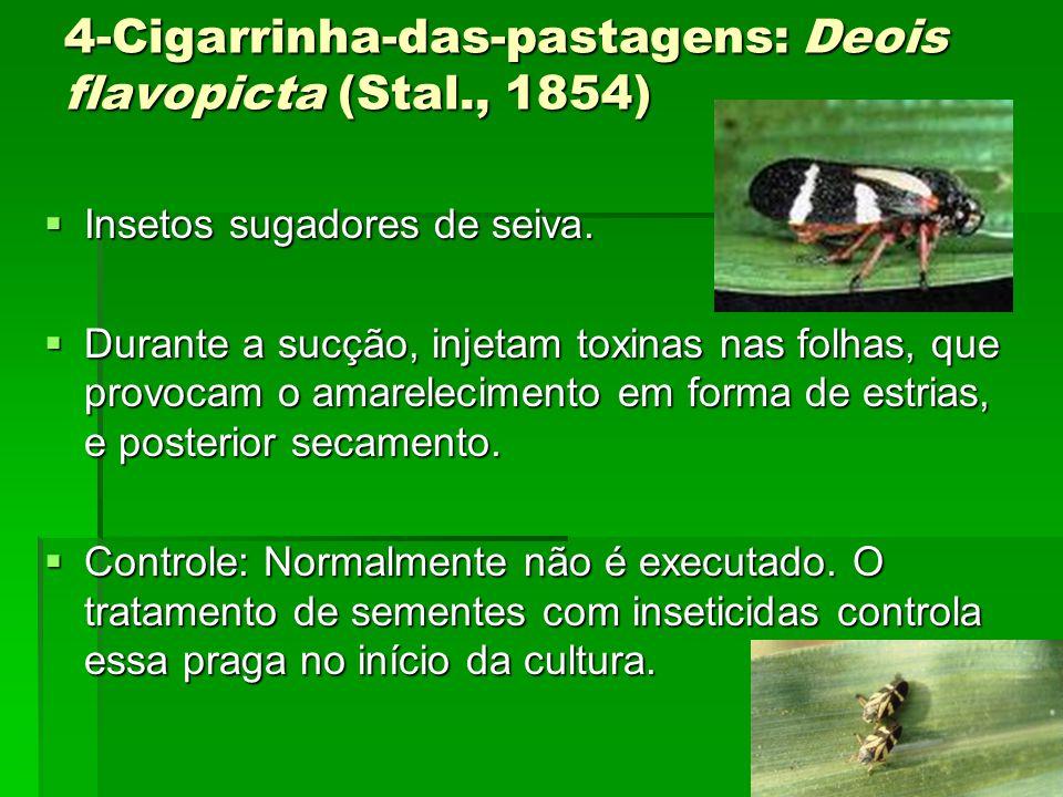 4-Cigarrinha-das-pastagens: Deois flavopicta (Stal., 1854)