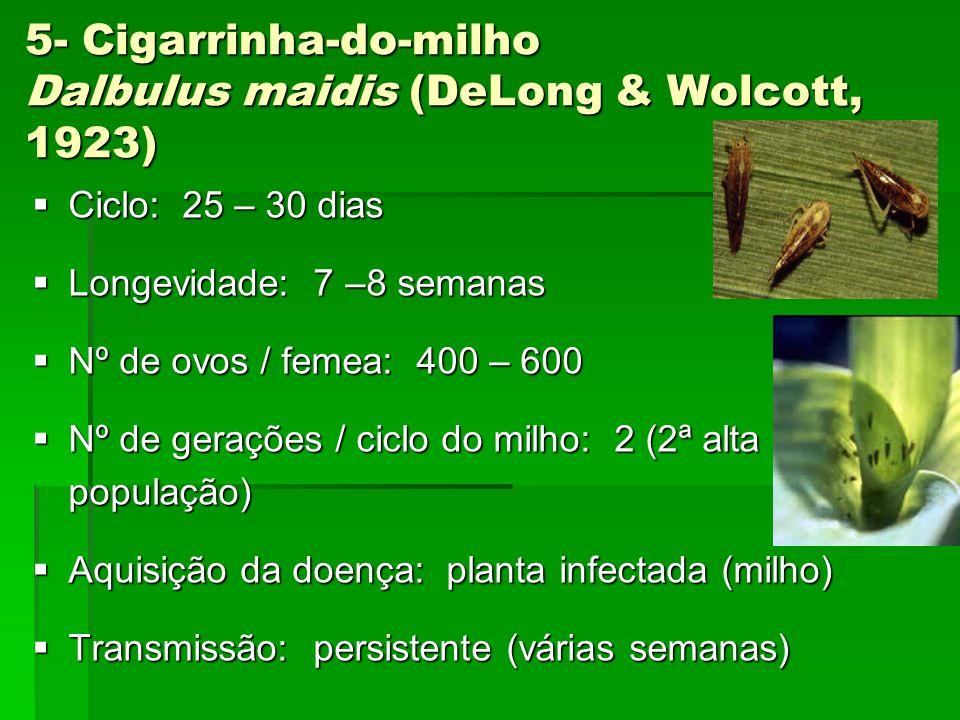 5- Cigarrinha-do-milho Dalbulus maidis (DeLong & Wolcott, 1923)