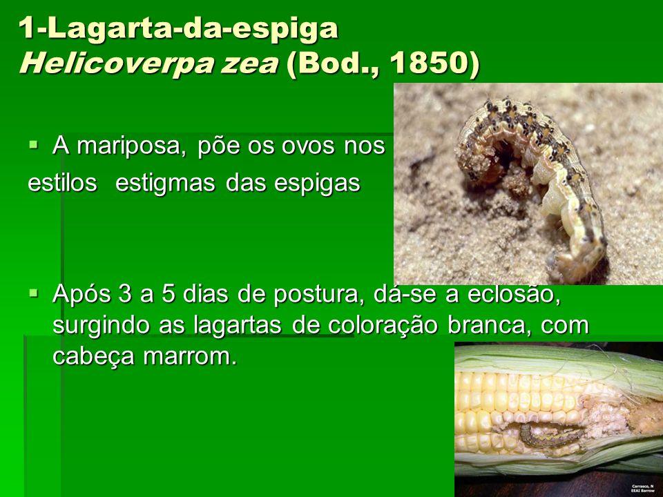 1-Lagarta-da-espiga Helicoverpa zea (Bod., 1850)