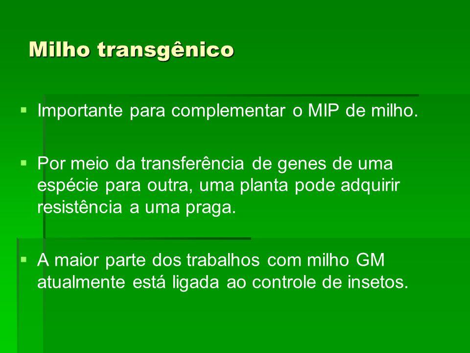 Milho transgênico Importante para complementar o MIP de milho.