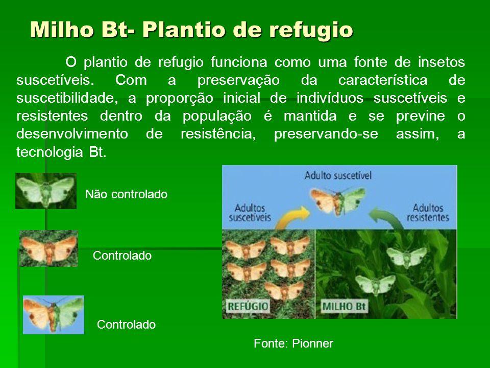 Milho Bt- Plantio de refugio