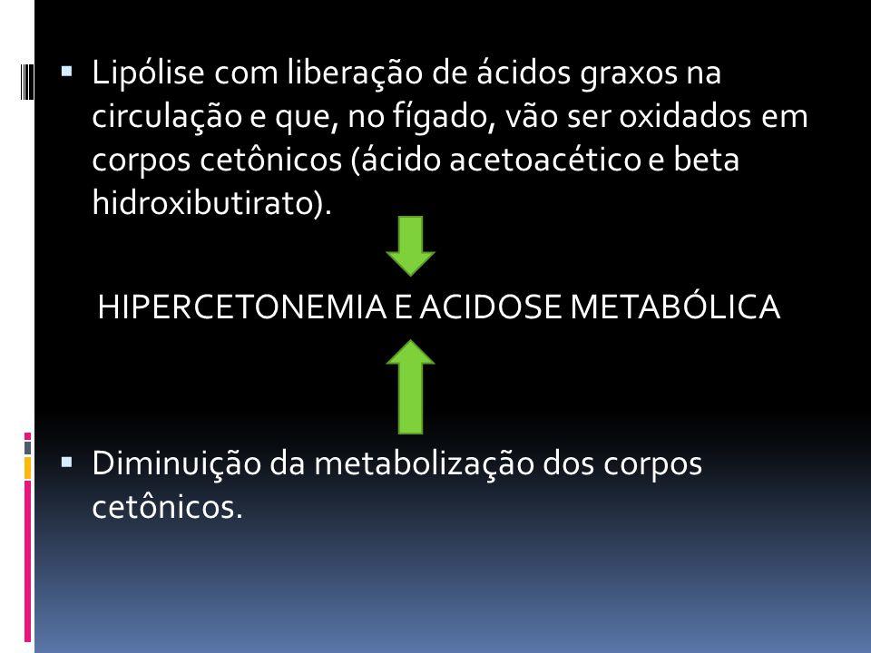 HIPERCETONEMIA E ACIDOSE METABÓLICA