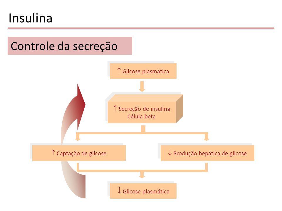  Produção hepática de glicose