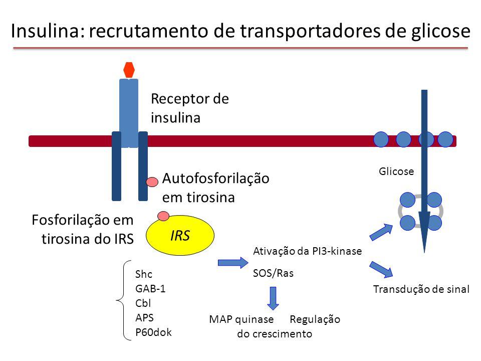 Insulina: recrutamento de transportadores de glicose